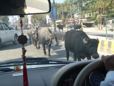 Complex traffic conditions  in India
